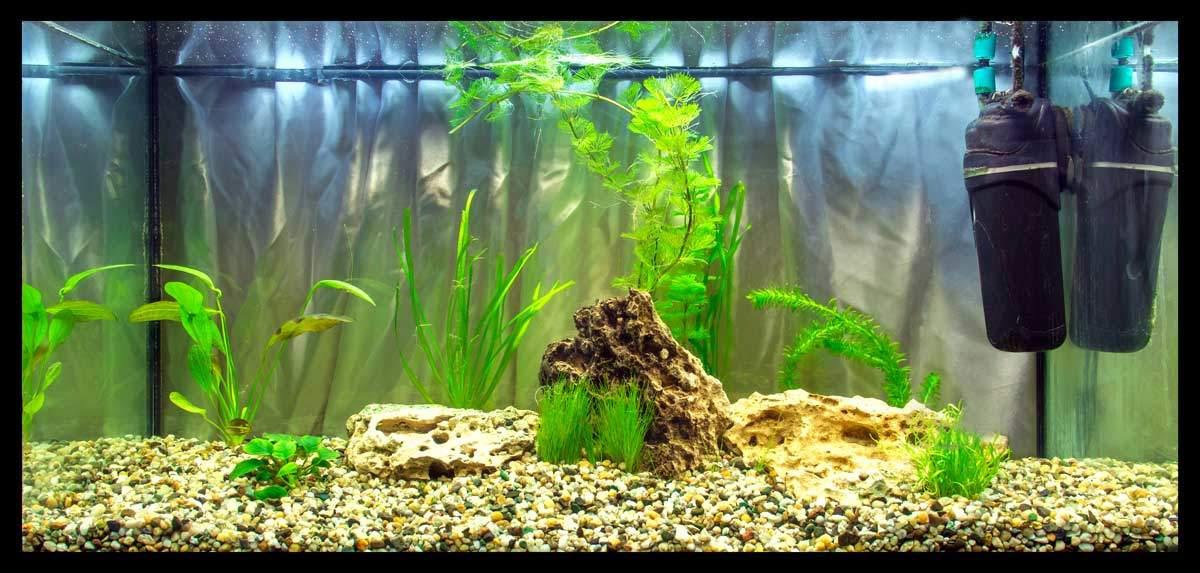 bigstock-Aquarium-Troscha