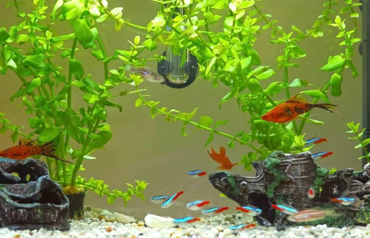 bigstock-Aquarium-63367183