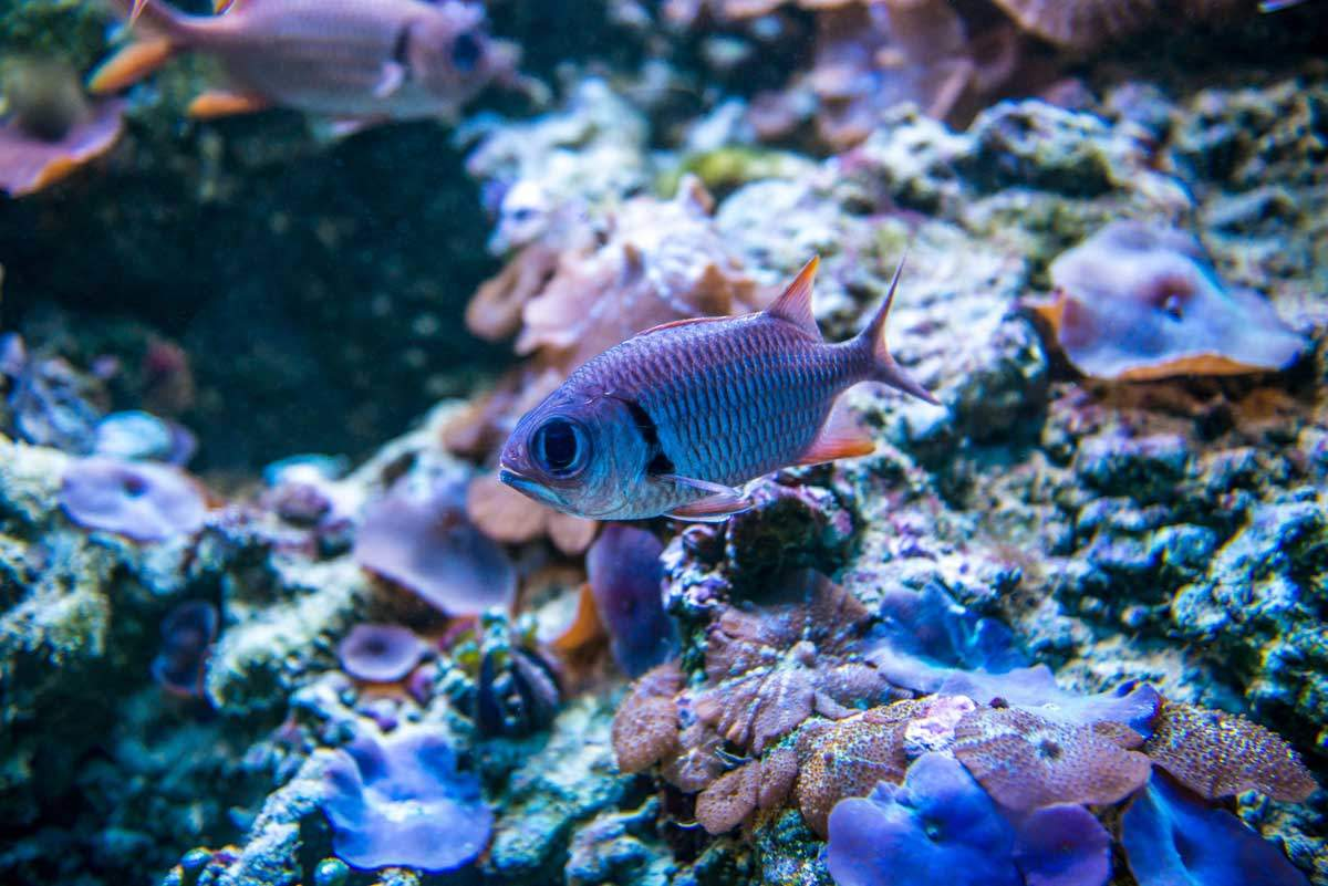 bigstock-Colorful-fish-in-aquarium-salt-96381407