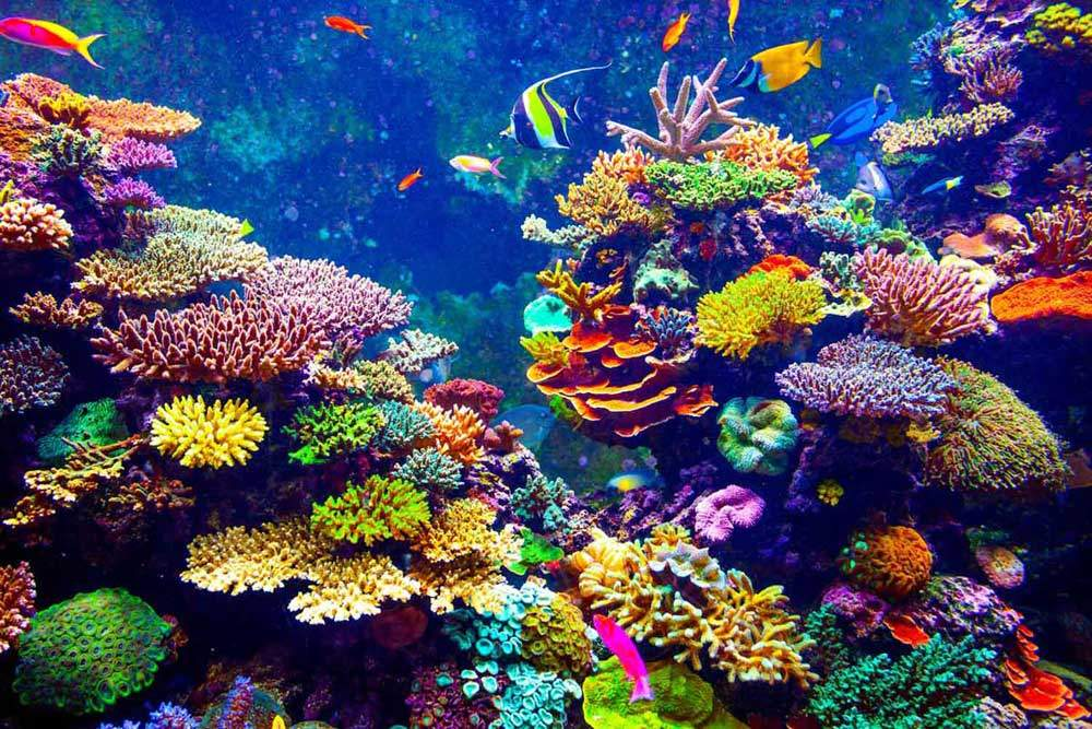 bigstock-Coral-Reef-and-Tropical-Fish-goinyk