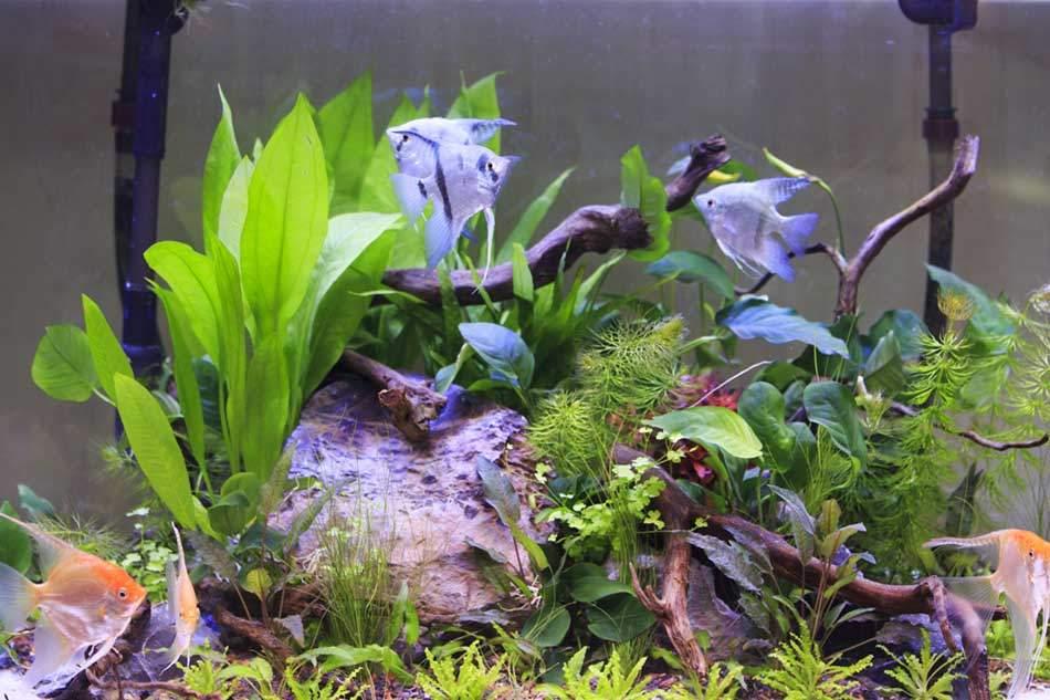 bigstock-Aquarium-And-Scalar-mauriziobiso