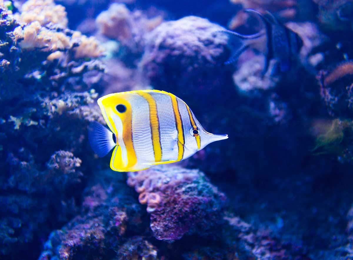 bigstock-Colorful-fish-in-aquarium-salt-tan4ikk