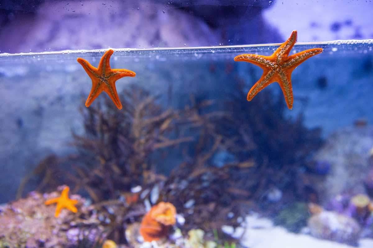 bigstock-Two-starfish-floating-Wavebreak-Media-Ltd