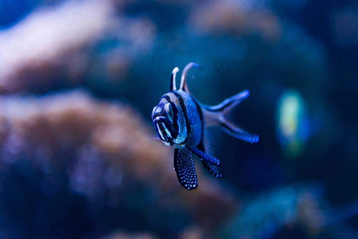 bigstock-Colorful-fish-in-aquarium-salt-95449922
