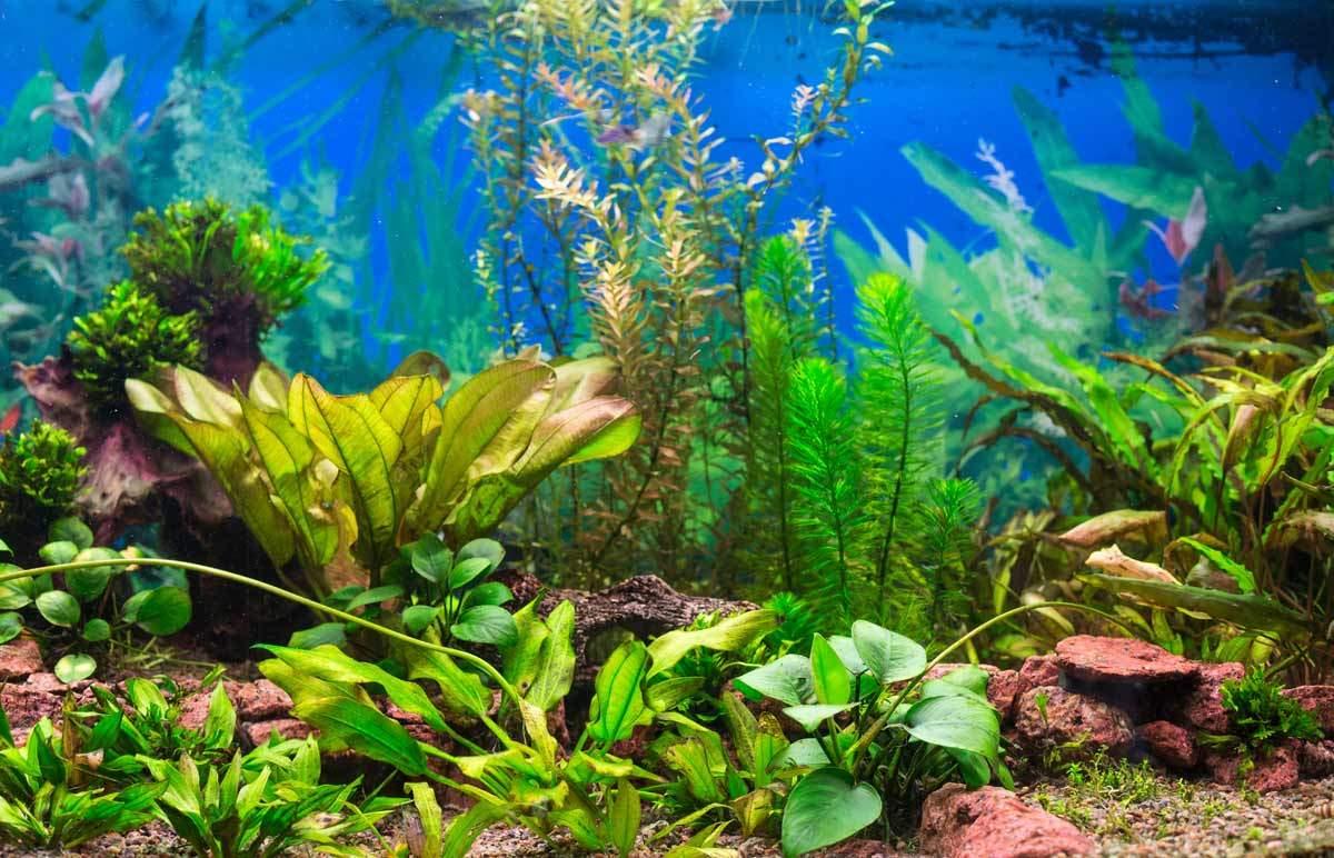 bigstock-Interior-Aquarium-46241566