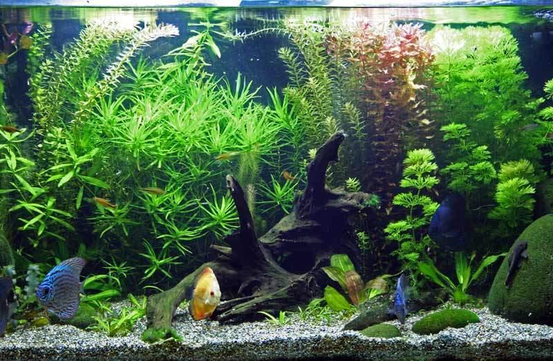 bigstock-Planted-Tropical-Freshwater-Aq-4965129